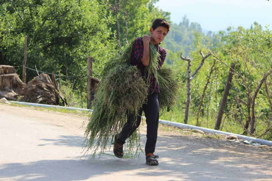 Kashmir - after economy, education and 4G, now more than COVID-19